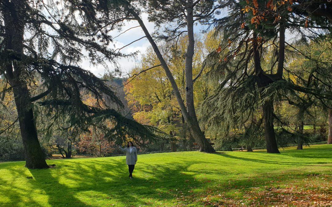 Gratitud, árboles y aceites esenciales